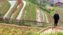 Bauer im Reisfeld (China)