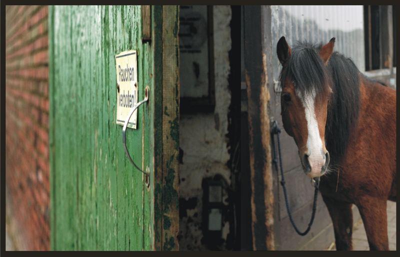 - Bauer, raucht Dein Pferd? -Nein. - Dann brennt dein Stall! -