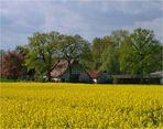 Bauernhof hinter der Rapsblüte