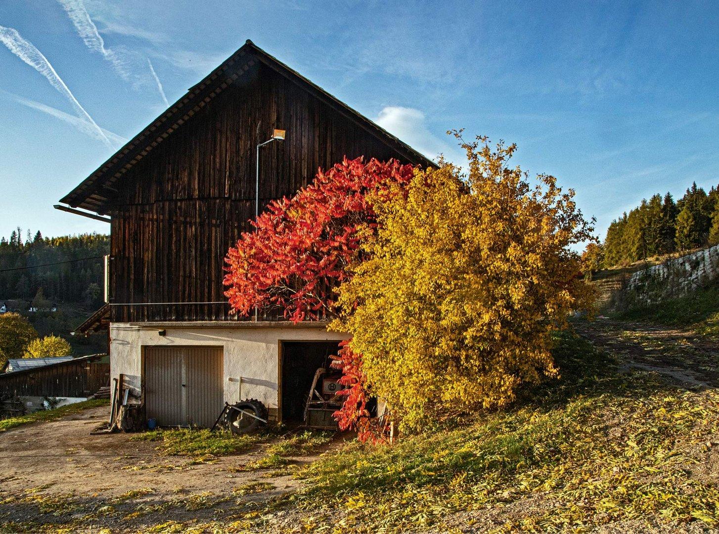 Bauernschuppen im leuchtendem Herbstgewand
