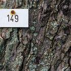 Baum 149