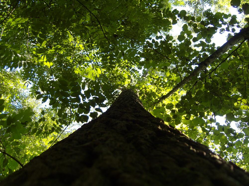 Baum 15.09.2007 in Mesum/Rheine