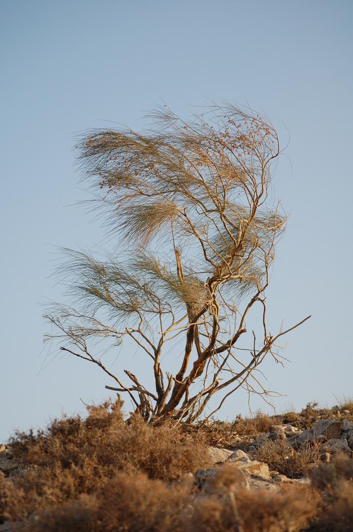 Baum :-)