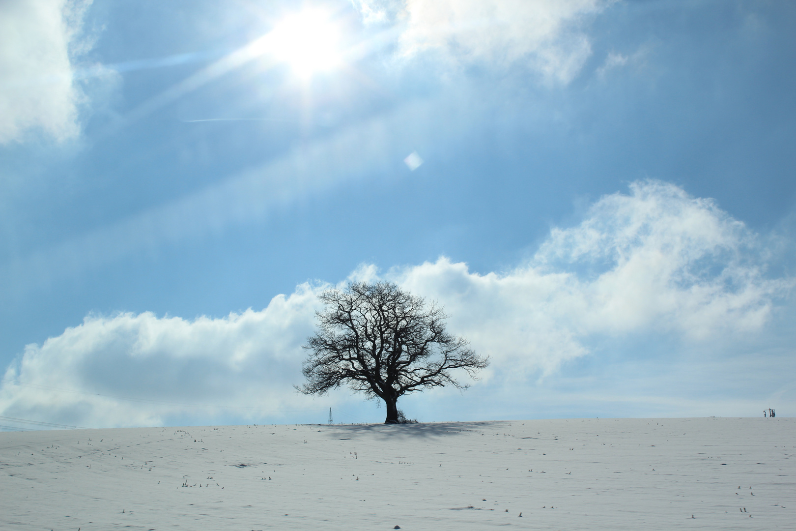 Baum ;)