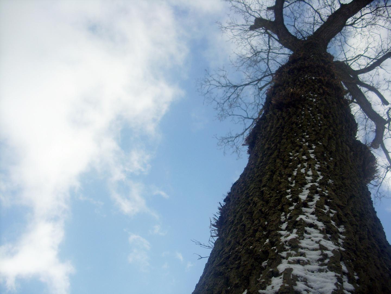 Baum?