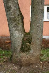 Baum-Akt | Tree Nude
