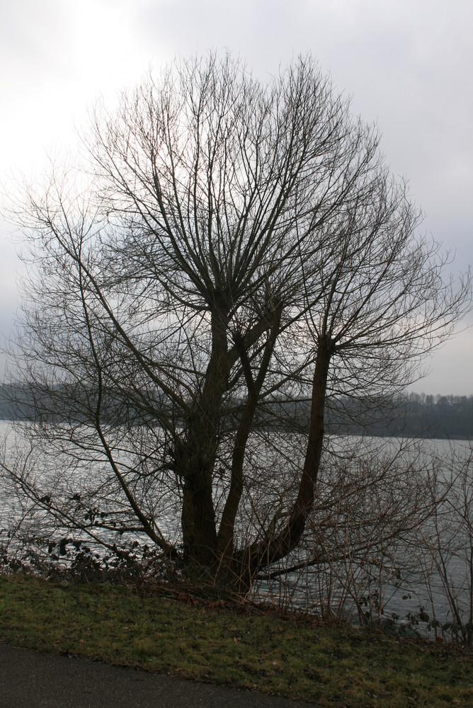 Baum am Baldeneysee