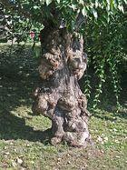 Baum am Elbufer in Dresden-Neustadt