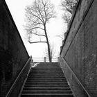 Baum am Ende des Tunnels