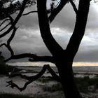 Baum am Meer