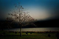 Baum am See 2