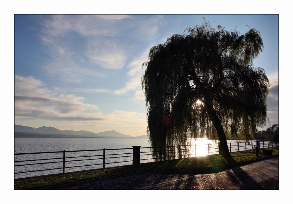 Baum am See ... aber wahrscheinlich gibt es noch kreativere Titel!? ;)