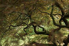 Baum am Sumpf