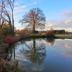 Baum am Teich