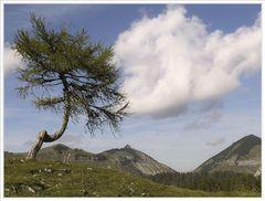 Baum am Trattberg