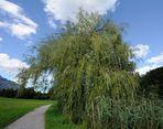 Baum am Weg / Schnittvariante