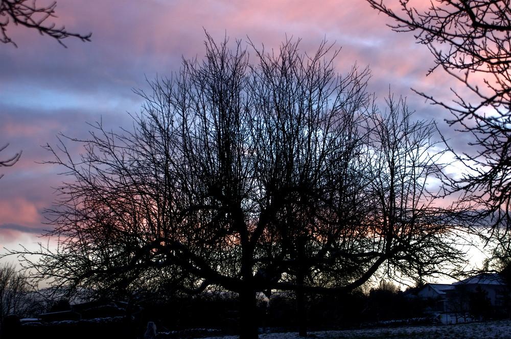Baum am Winterabend