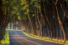 Baum an Baum im Morgenlicht