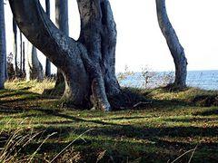 Baum an der Küste