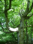 Baum an der Ostsee