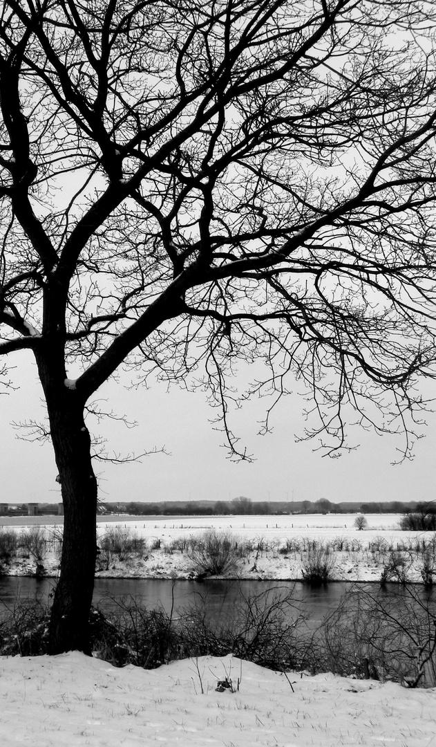 Baum an der Weser