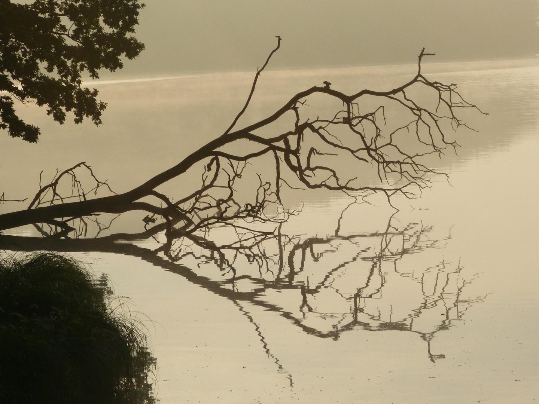 Baum an Talsperre