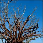 Baum-Art
