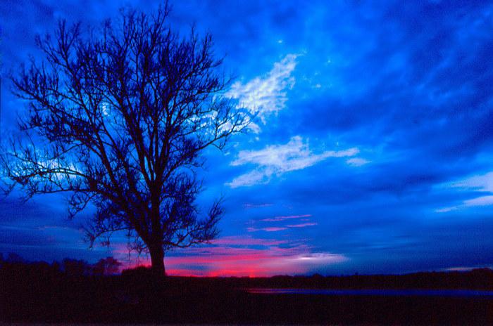 Baum auf Blau