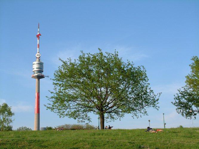 Baum auf der Donauinsel