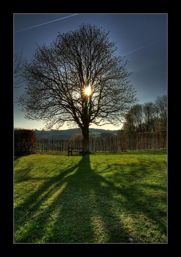 Baum auf der Ludwigshöhe