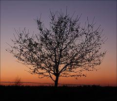 Baum auf Farbpapier