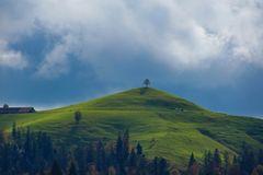 Baum auf Hügel im Emmental CH
