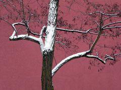 Baum auf Pink