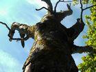 Baum auf Rügen