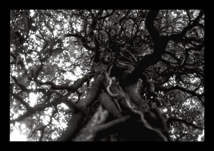 Baum aus der Sicht einer Ameise