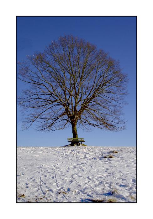 Baum-Bank-Schnee