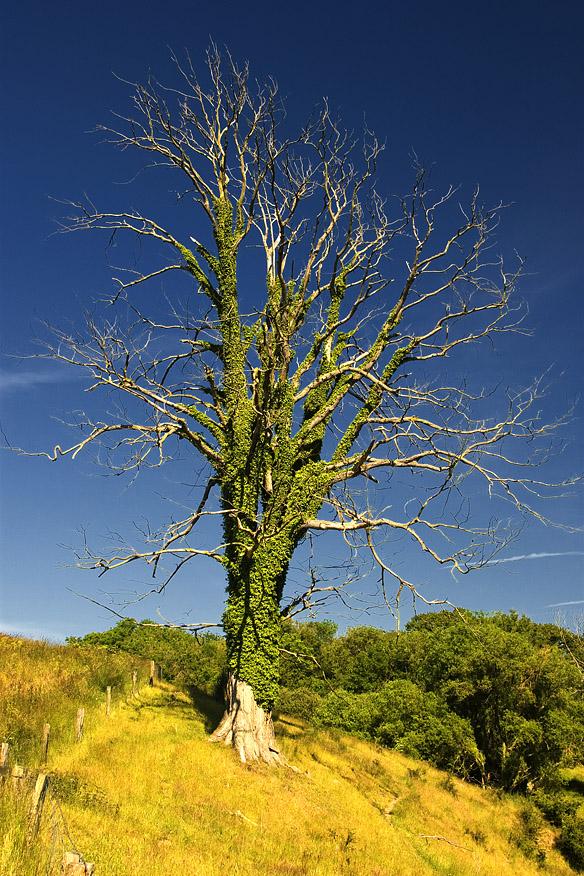Baum bei Hammershuis