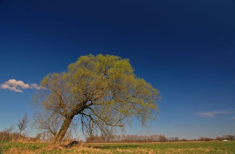 Baum bei Ruehen