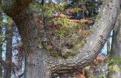 Baum bewachsen - V7 Sony-w10 / ein Foto von SK