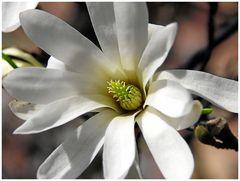 Baum-Blüte...