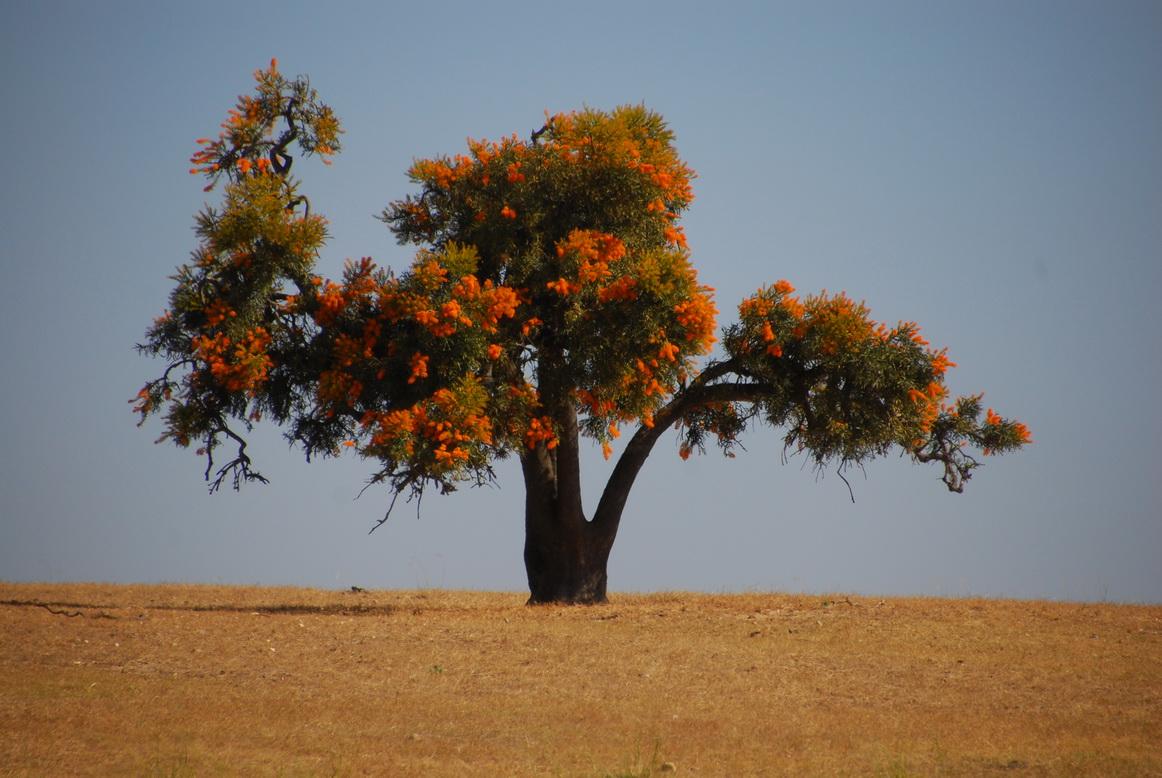Baum-Blumenstrauss