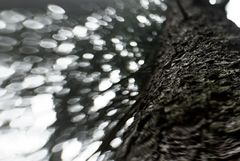 Baum-Borke-Wipfel