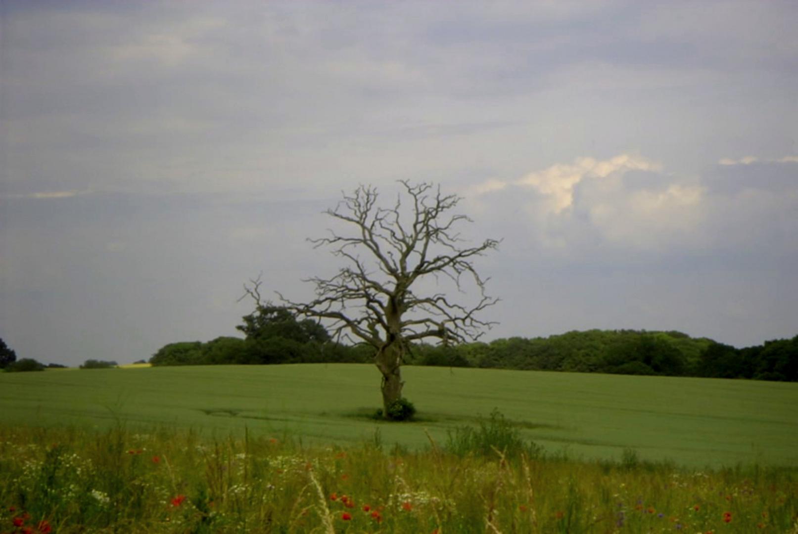 Baum Death