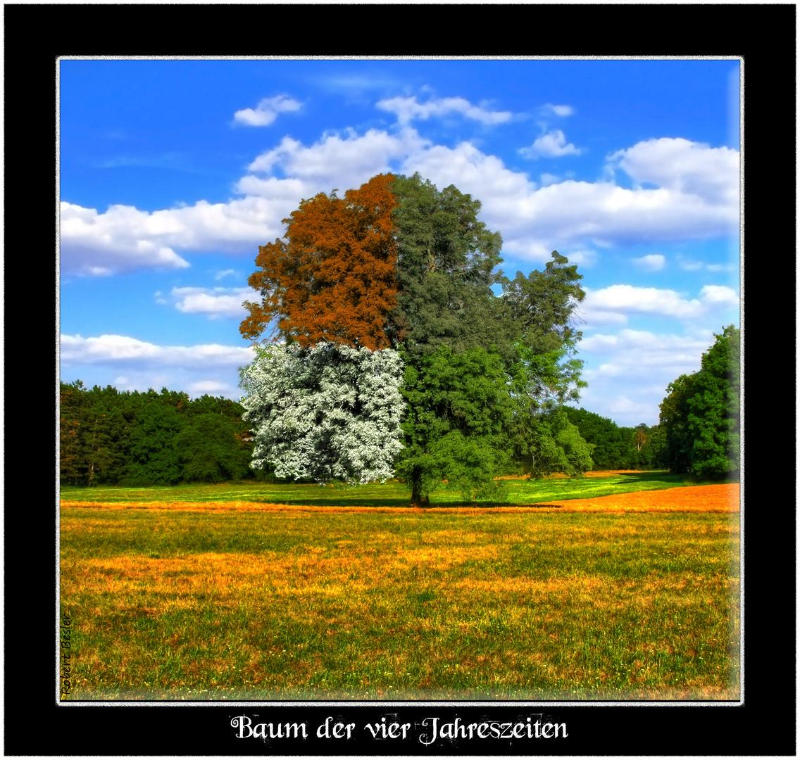 baum der vier jahreszeiten foto  bild  fotomontagen