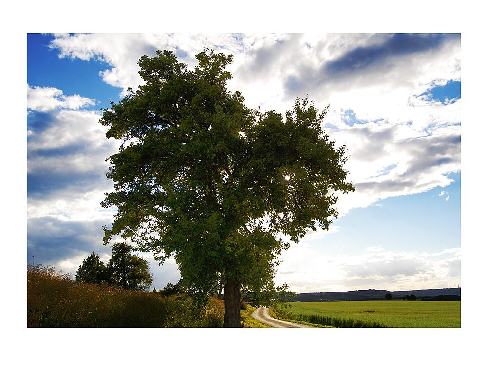Baum des Alters