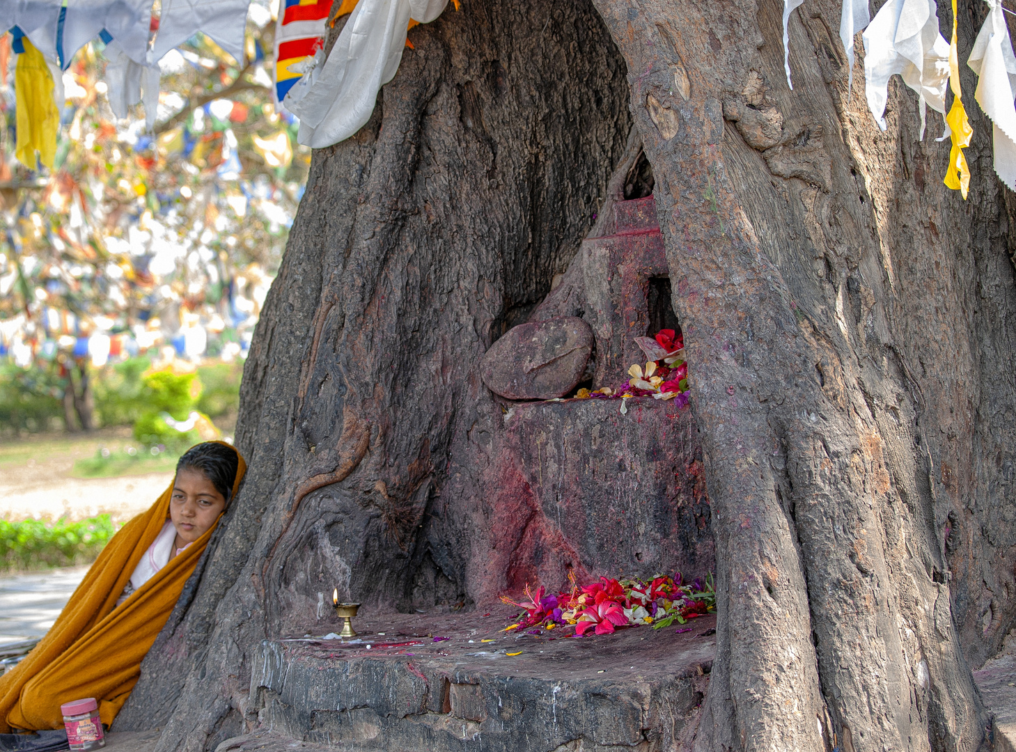 Baum des Erwachens