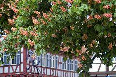 Baum des Jahres in voller Blüte
