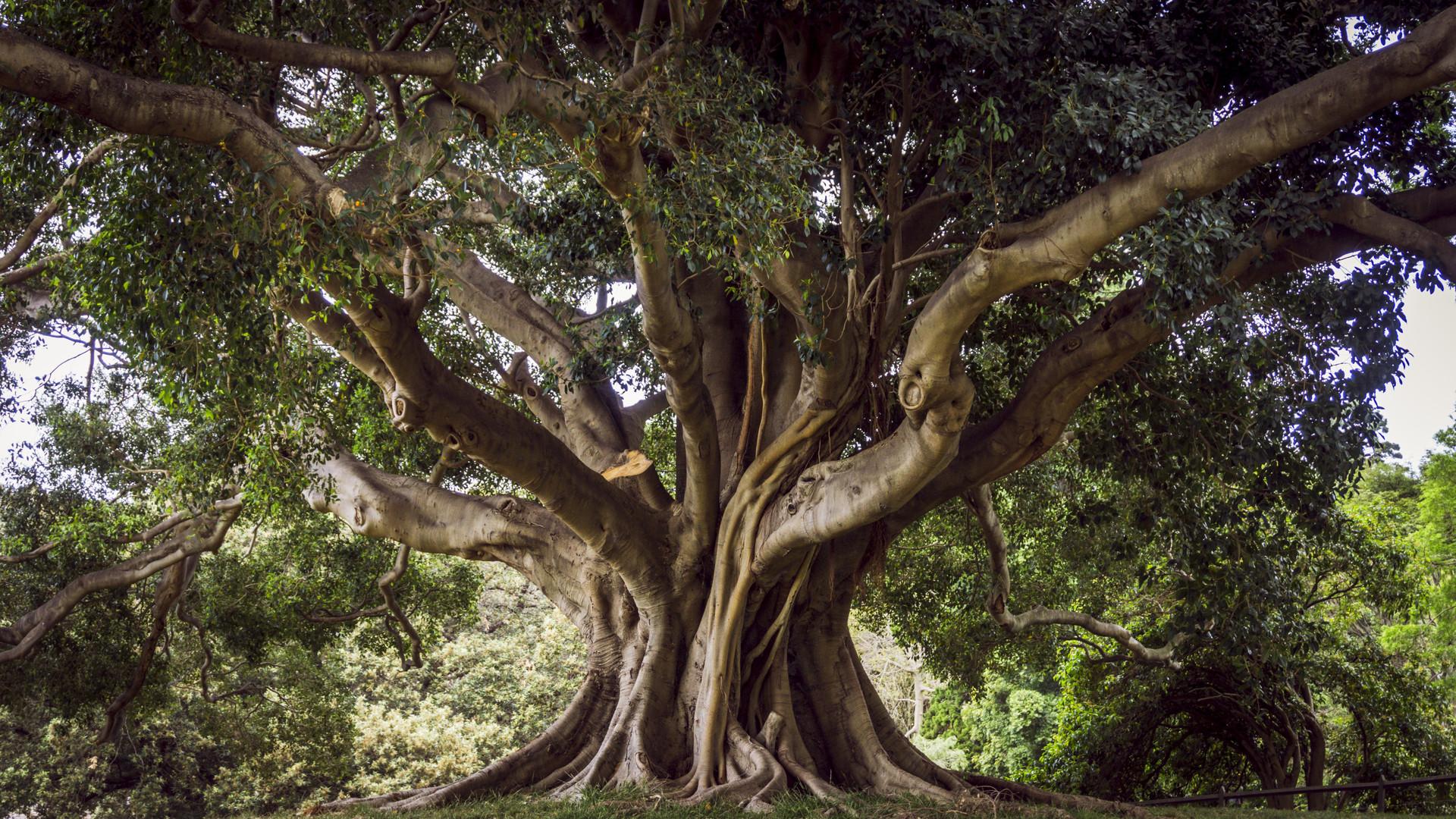 Baum des Lebens ~ Sydney