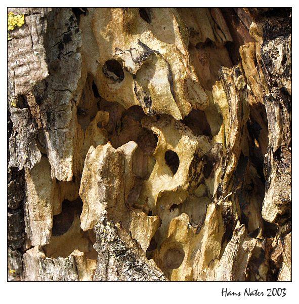 Baum-Detail