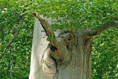 """""""Baum-Elefant"""""""